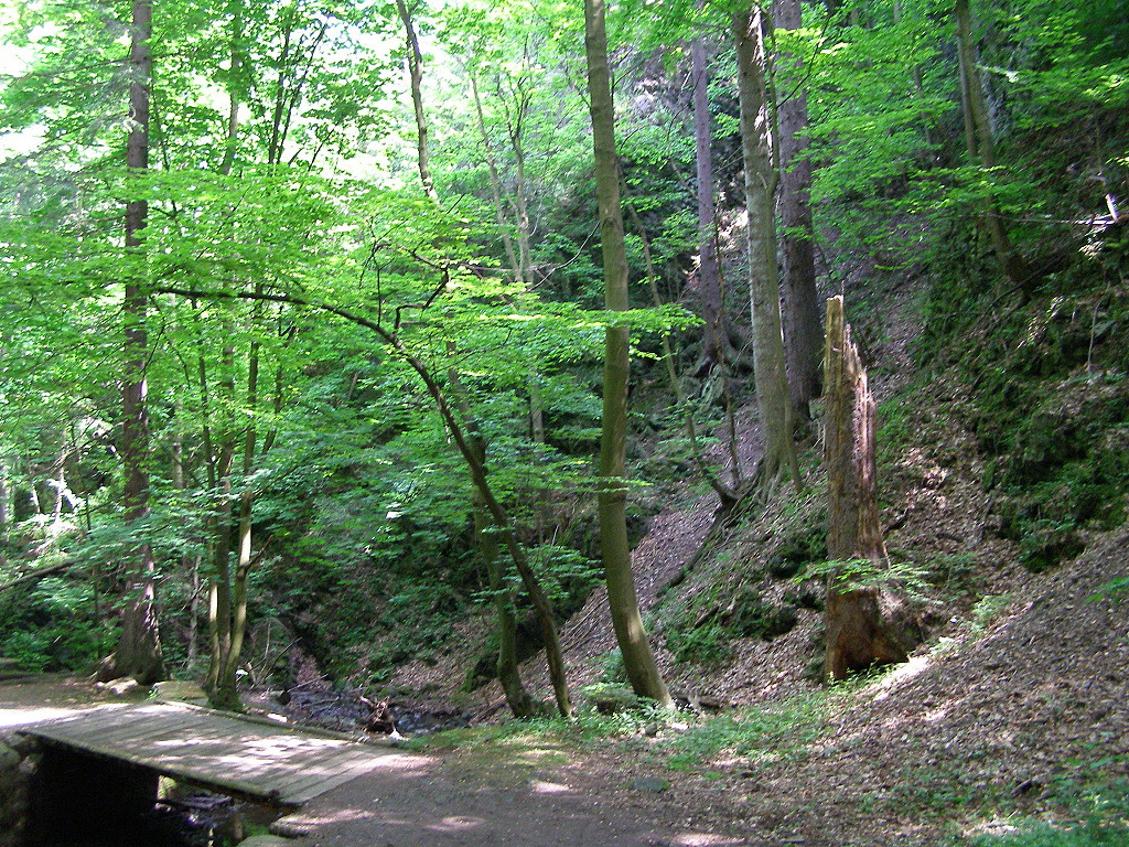 Wawoz Mysliborski