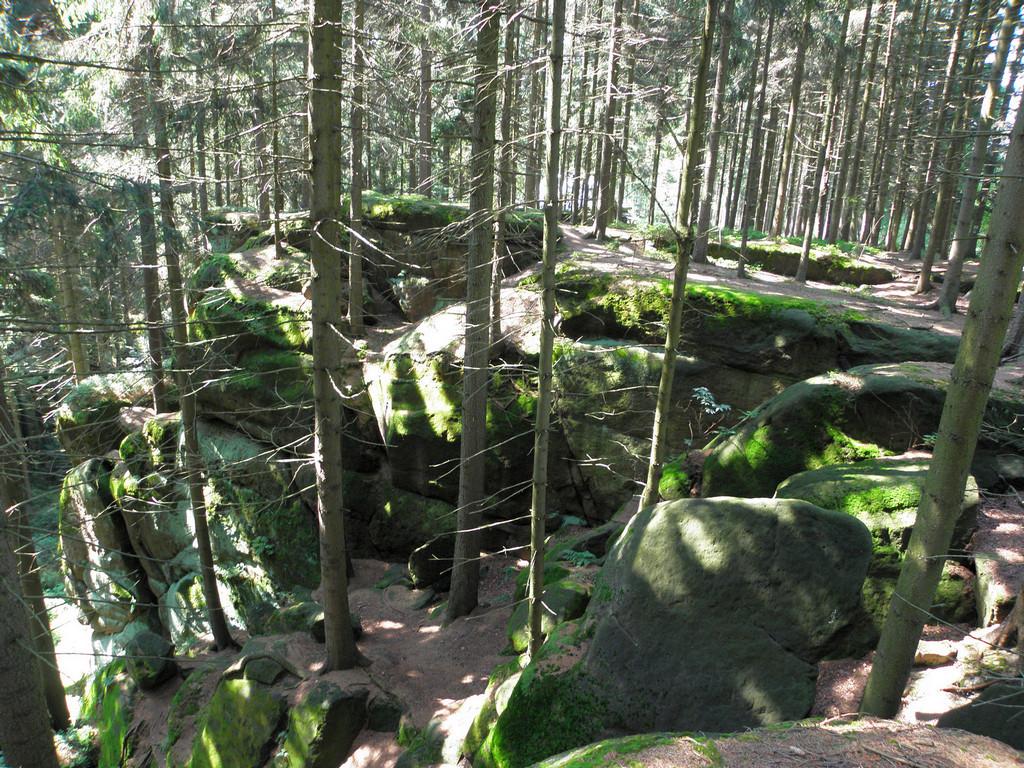 Nad Leśnym Wąwozem