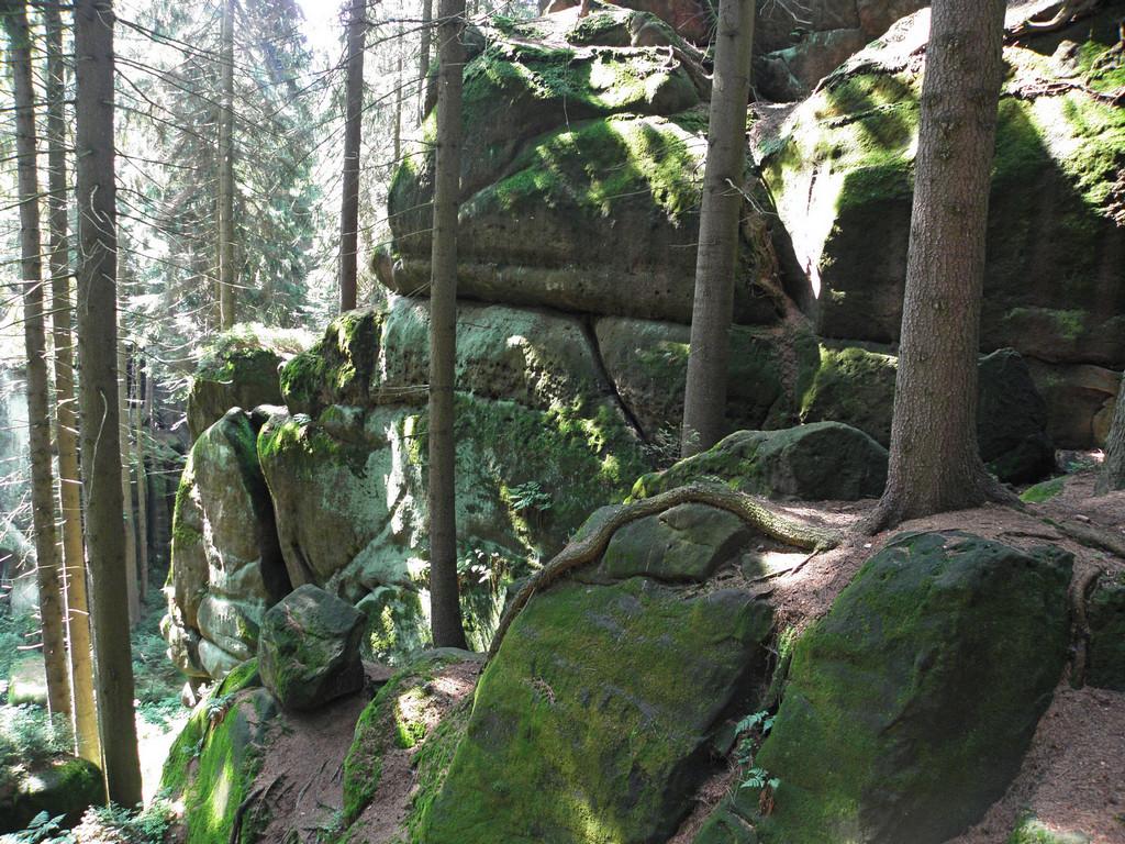 Zejście do Leśnego Wąwozu