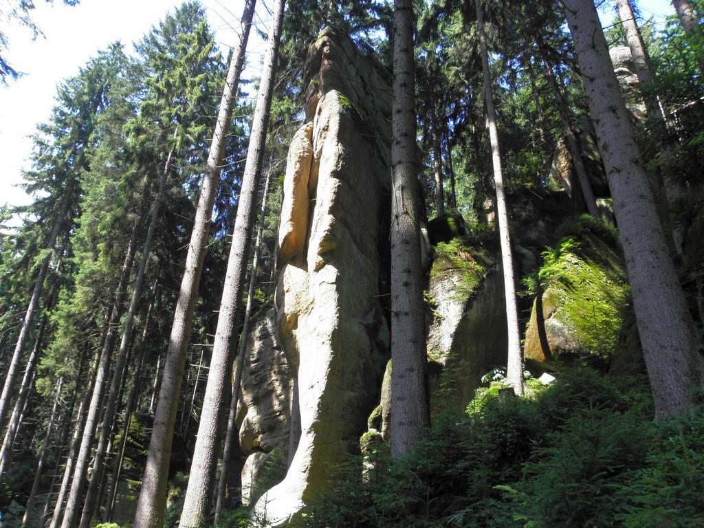W Leśnym Wąwozie