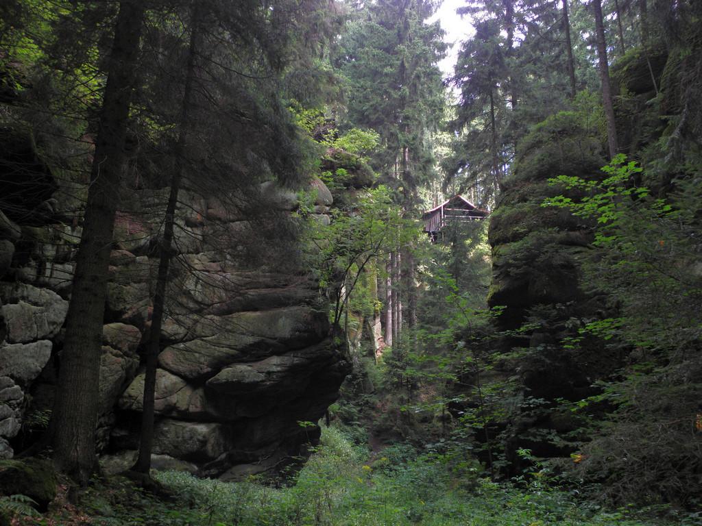 Wylot Leśnego Wąwozu