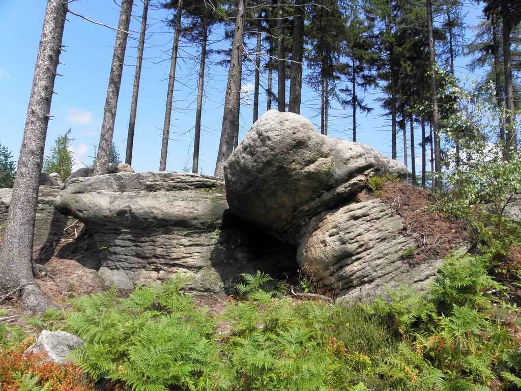 Kamienne Grzyby