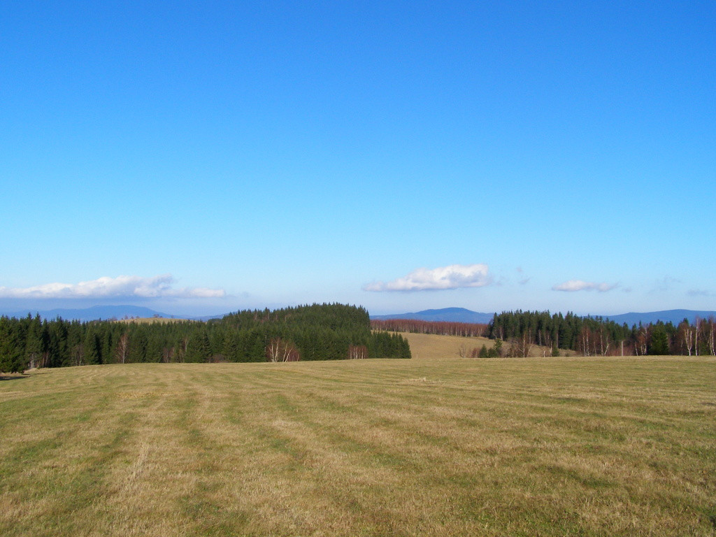 Meadows around Puchaczowka